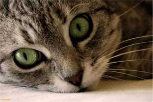 a cat's head with two green eyes with slit pupils