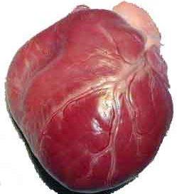 red lumpy heart