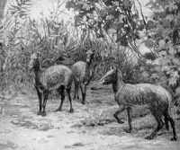 Drawing of three small animals kind of like horses, kind of like sheep, in a woods.