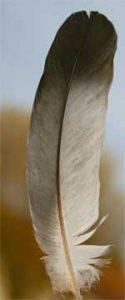 a bird feather
