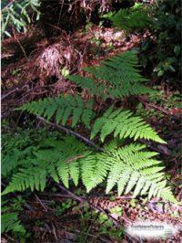 green fern leaves in a dark area