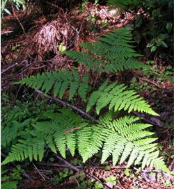 green fern leaves in a dark area
