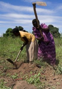 Women hoeing fields (Uganda)