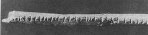 Lebombo tally stick (35,000 BC)