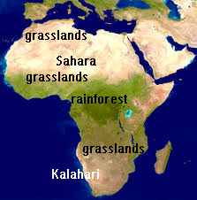 Africa is desert across the top and bottom, with a strip of grasslands and then rain forest across the center - African environment