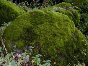 a moss-covered rock