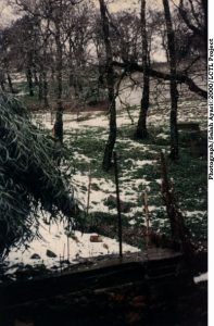Trees with a little snow on the ground: African environment