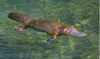 animal swimming in the water