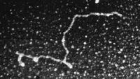 RNA: black background with a twisty white line on it