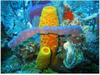 red yellow and purple sponges in water