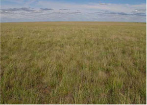 Central Asian steppe - brownish green grass and blue sky all the way to the horizon