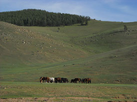 grasslands with cattle herd - home of the Avars