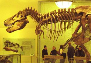 dinosaur skeleton with a big head