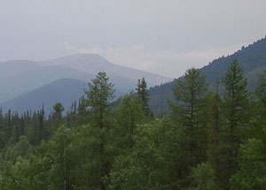 Ural mountains in mist with pine trees
