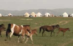 white yurts - tents - on green grass with horses in the foreground