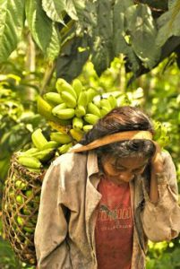 Colombian woman with a load of bananas