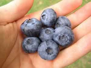 A white hand holding blueberries - from the scavenger hunt
