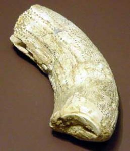 A bone sickle - the flint teeth are missing now. History of farming.