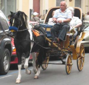 white man driving a horse and carriage