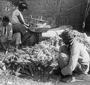 Brazilians peeling yuca (1930s)