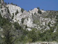 a mountain of gray rock with green pine trees