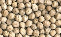 Dried chickpeas - cream-colored little round seeds