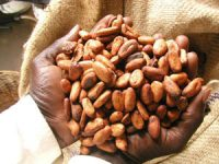 Cocoa beans (Tom Neuhaus, Project Hope and Fairness)