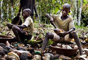 Children open cocoa pods (Ivory Coast, 2011)