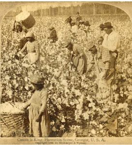 Photo of black people picking cotton