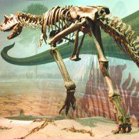 A dinosaur skeleton