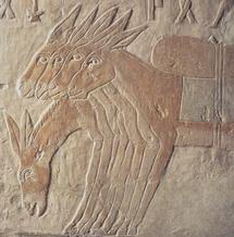 Egyptian painting of donkeys