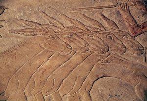 Donkeys in Old Kingdom Egypt: Ancient Egyptian animals