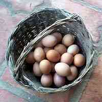 a basket of eggs