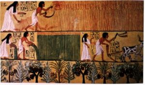 Egyptian men and women doing farm work