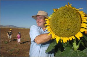 A happy white farmer holding a giant sunflower