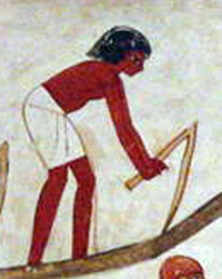 An Egyptian using a hand plow, essentially a bent stick (about 1400 BC)