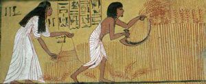 Egyptian painting of a man and woman harvesting wheat with a sickle