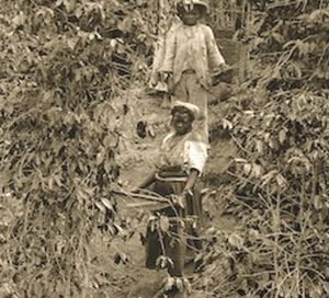 Enslaved Afro-Brazilians harvest coffee (Brazil, ca. 1882)