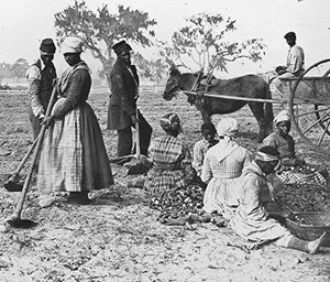Enslaved African-Americans plant sweet potatoes (1862/3)