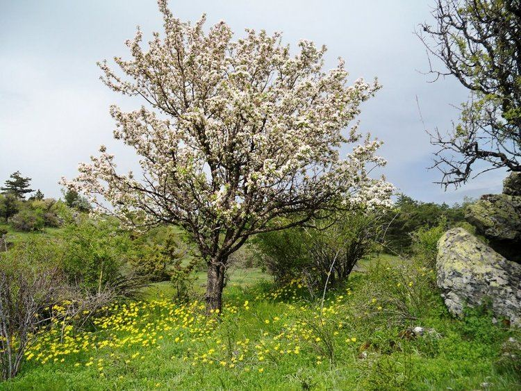 a tree in a field with pink blossoms