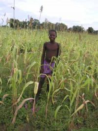 A boy in a millet field in Burkina Faso (West Africa)