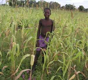 A boy in a millet field in Burkina Faso (West Africa)
