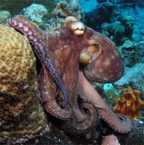 octopus - Ordovician period