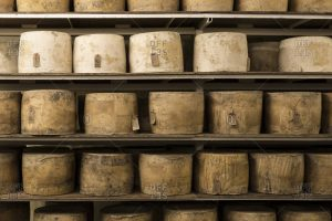Aging cheese on shelves