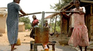 Women pressing palm oil in West Africa