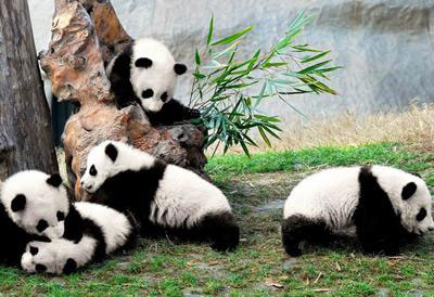 Chinese Animals Environment Of China Quatr Us Study Guides