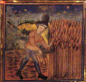 A medieval farmer reaping