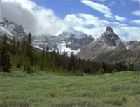 Rocky Mountains: a green meadow with snowy mountains in the background