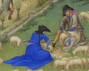 medieval man and woman shearing sheep