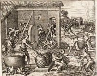 Slaves on a sugar plantation about 1550 AD